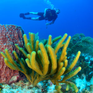 Diving in cozumel 2